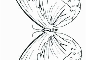 Butterfly Coloring Pages Print 28 Coloring Pages butterflies
