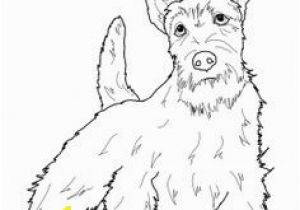 Cairn Terrier Coloring Pages 217 Best Dogs to Color Images On Pinterest