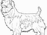 Cairn Terrier Coloring Pages Boston Terrier Coloring Pages at Getcolorings