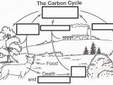 Carbon Cycle Coloring Page Wizer Free Interactive Carbon Cycle Biology Cycles Blended