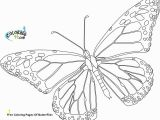 Cartoon butterflies Coloring Pages Free Coloring Pages butterflies 20 Printable butterfly Coloring
