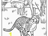 Cheetah Coloring Pages Online African Animals Coloring Pages
