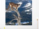 Cheetah Print Wall Murals Mountain Lion Od Dead Wall Mural by Wallmonkeys Peel and Stick