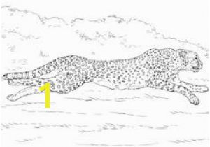 Cheetah Running Coloring Pages Die 709 Besten Bilder Von Coloring Pages Animals