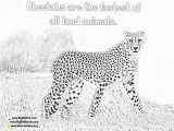 Cheetah Running Coloring Pages Line Cheetah Coloring Pages Lexilu Pinterest