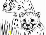 Chester Cheetah Coloring Pages 40 Best Cheetah Paint Images