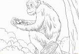 Chimp Coloring Pages Chimpanzee Coloring Pages