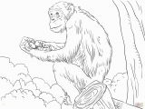 Chimp Coloring Pages Chimpanzee Coloring Pages