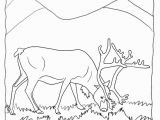 Christmas Reindeer Coloring Pages Real Reindeer Coloring Pages From Our Real Animal Coloring