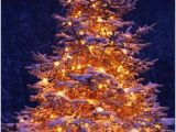 Christmas Wall Murals Uk 7 Best Christmas Tree Wallpaper Images