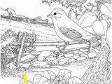 Colorado State Bird Coloring Page 2222 Best Coloring Pages Adults and Kids Images