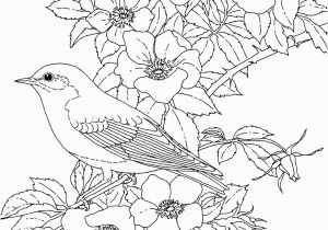 Colorado State Bird Coloring Page Adult Coloring Pages Flowers to and Print for Free