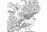 Colorado State Bird Coloring Page Colorado Wordsearch Crossword Puzzle and More