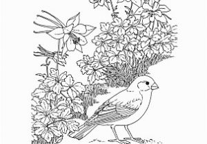 Colorado State Bird Coloring Page Colorado Wordsearch Crossword Puzzle and More