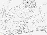 Coloring Animal Pages for Printing Coloring Page to Print Animal Mandala Lovely Cat Printable