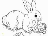 Coloring Page Of A Rabbit Bunny Rabbit Coloring Pages