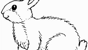 Coloring Page Of A Rabbit Rabbits Coloring Pages