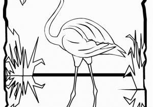 Coloring Page Of Flamingo Flamingo Coloring Page