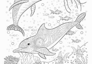 Coloring Pages for Ocean Animals Delfine Malvorlagen