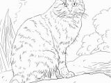 Coloring Pages Of Cats Printable European Wild Cat Coloring Page