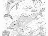 Coloring Pages Of Dolphins Printable Delfine Malvorlagen