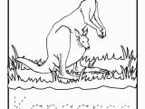 Coloring Pages Of Kangaroos Kangaroo Coloring Page Beautiful Kangaroo Coloring Sheet 13