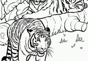 Coloring Pages Of Tiger Cubs Realistic and Detailed Coloring Page Tiger for Older Kids