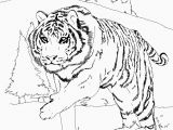 Coloring Pages Of Tiger Cubs Tiger Cub Scouts Coloring Pages Tiger Coloring Pages Popular Awesome