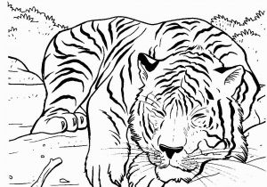 Coloring Pages Of Tiger Cubs Tiger Sleeping Lions and Tigers Pinterest