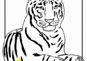 Coloring Pages Of Tiger Cubs Tiger with Rough Fur Lions and Tigers Pinterest