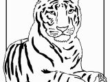 Coloring Pages Of White Tigers Outline A Tiger Az Coloring Pages