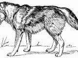Coloring Pages Of Wolves Unlock Coloring Pages Wolfs Advice Wolves High Tech