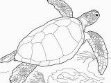 Coloring Pages Of X Ray Meeresschildkröte Malvorlagen Sea Turtle Loggerhead Sea
