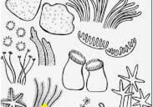 Coral Coloring Pages 256 Best Kids Coloring Pages Images