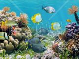 Coral Reef Wall Mural Panorama Coral Reef Affordable Poster Wall