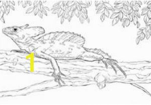 Crested Gecko Coloring Page 32 Best Kids Coloring Page Images On Pinterest