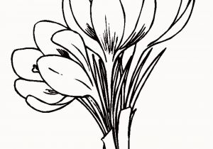 Crocus Coloring Page 25 Inspirational Spring Flower Coloring Pages