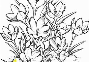Crocus Coloring Page Crocus N 9 Kytky Pinterest