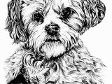 Cute Animal Coloring Pages for Adults Coloring Pages for Adults Difficult Animals 39