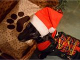 Cute Christmas Puppy Coloring Pages Free Photo Puppy Pup Pet Dog Cute Doggo Christmas Adorable
