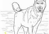 Cute Husky Puppy Coloring Pages Husky Coloring Pages Siberian Husky Seska Pinterest
