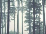 Dark forest Wall Mural Dreamy Foggy forest Scene Mural Misty forests Mural forest