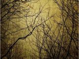 Dark forest Wall Mural Mystic Light Wall Mural Wallpaper Nature