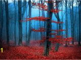 Dark forest Wall Mural Red forest Wall Mural Tree Wallpaper