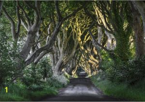 Dark forest Wall Mural the Dark Hedges Wall Mural Ireland Wall Covering forest