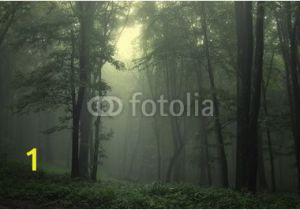 "Dark forest Wall Mural Wall Mural ""forest Summer Dark Green forest after Rain"