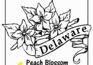 Delaware State Flower Coloring Page New York State Flower Design Pinterest
