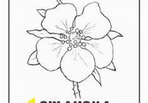 Delaware State Flower Coloring Page Oklahoma State Flower Quilting Pinterest