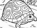 Diego Halloween Coloring Pages Malvorlage Schildkröte
