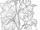 Dogwood Tree Coloring Page 546 Best Coloring Pages Images On Pinterest In 2018